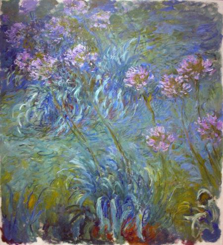 Monet, Agapanthus
