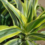 Il verde in casa: problemi e rimedi