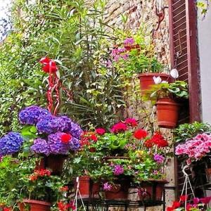 Manutenzione delle piante quando siamo in vacanza - Creare un giardino sul balcone ...