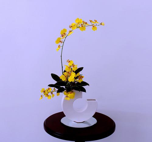 Coltivazione in vaso oncidium