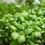 Creare un angolo di Erbe Aromatiche in Giardino