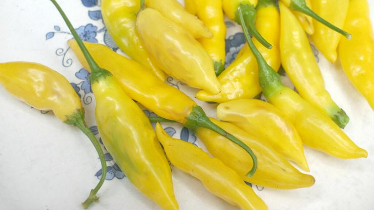Peperoncino hot lemon