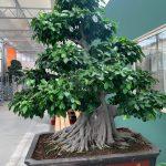 Tutto quello che vorreste sapere sui bonsai ma non avete mai osato chiedere. Intervista a Casita Hermosa.