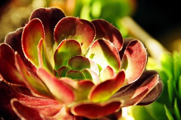 Le piante grasse consigli coltivazione e cura for Piante grasse senza spine