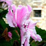 Le piante mese per mese: Settembre ed Ottobre