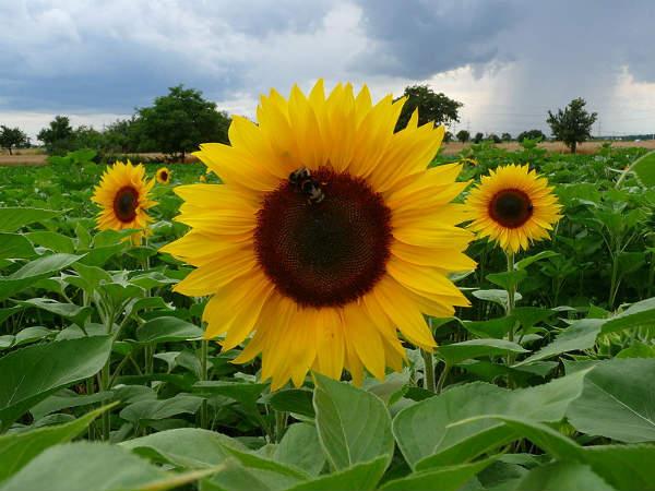 Le piante mese per mese agosto e settembre consigli for Fiori di agosto