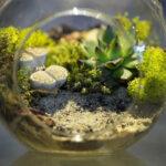 Il terrarium caratteristiche e vantaggi