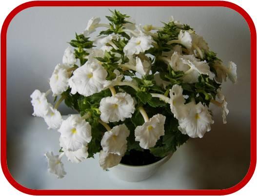 Piante e fiori for Piante secche ornamentali