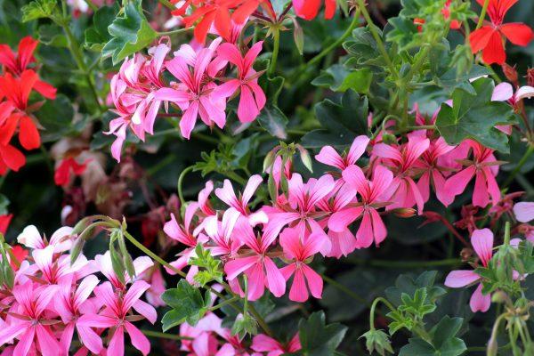 Aprile e maggio: balconi fioriti e giardino in ordine. Scopri le attività da fare per prenderti cura delle tue piante