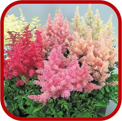 Fiori per aiuole pieno sole issopo with fiori per aiuole for Piante da giardino perenni pieno sole