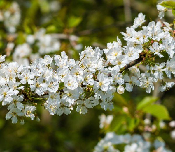 Cosa fiorisce ad aprile?