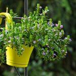 Le piante mese per mese: Febbraio e Marzo