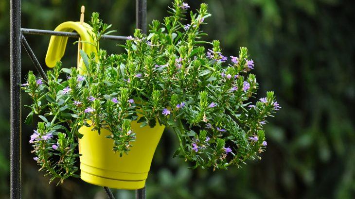 Cura delle piante a febbraio e marzo