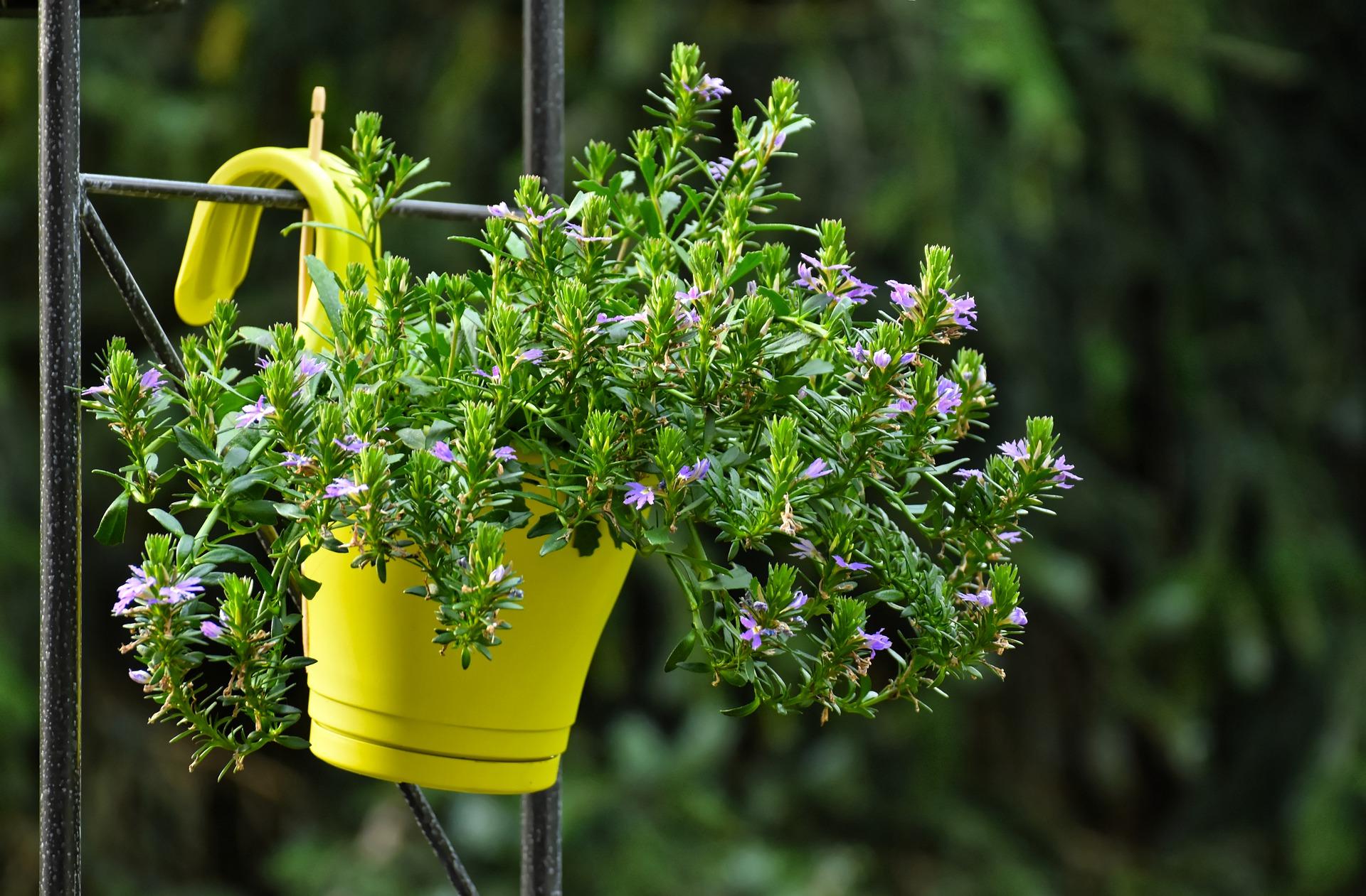 Piante Rustiche Da Balcone le piante di cui occuparsi a febbraio e a marzo