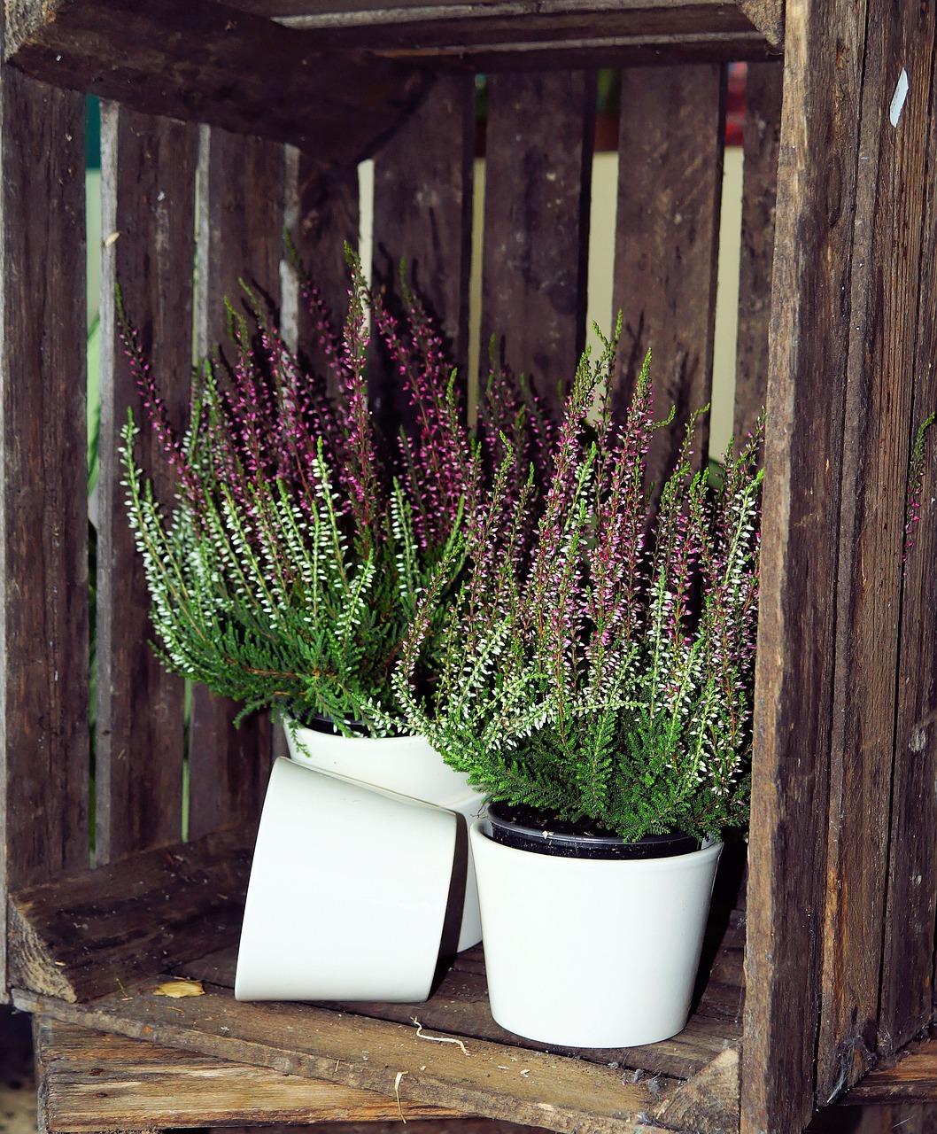 Fioriere con bancali consigli coltivazione e cura - Fioriere per davanzale finestra ...