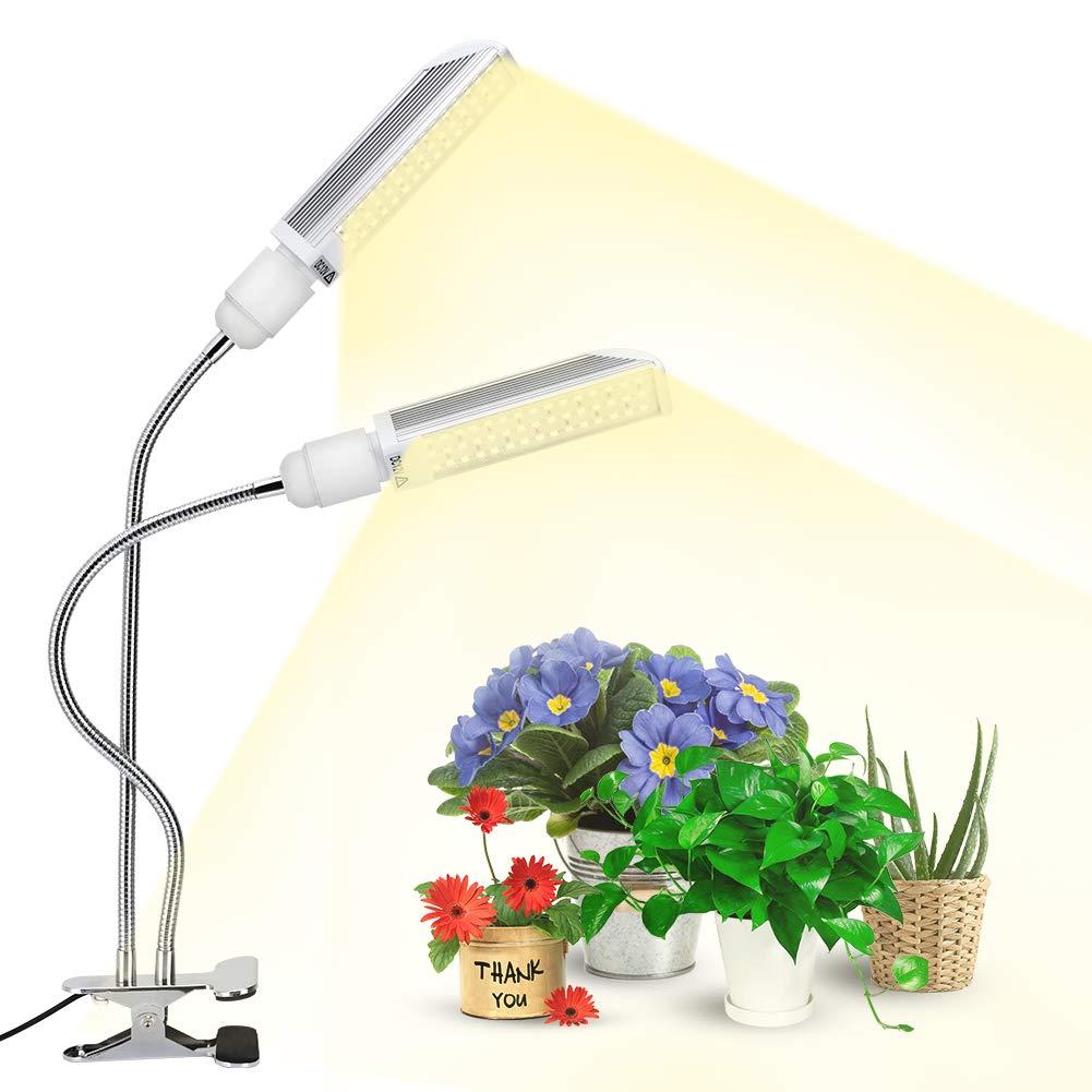 Piante Da Appartamento Ambiente Buio lampade e luci per coltivare le piante indoor: consigli per
