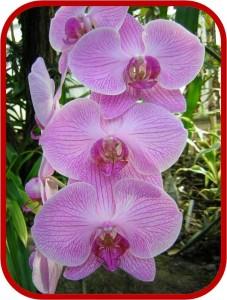 Piante da appartamento - Orchidee da appartamento ...