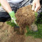 Il tappeto erboso: tipi, costo, messa in posa e manutenzione. Intervista a Daniele Marinotto