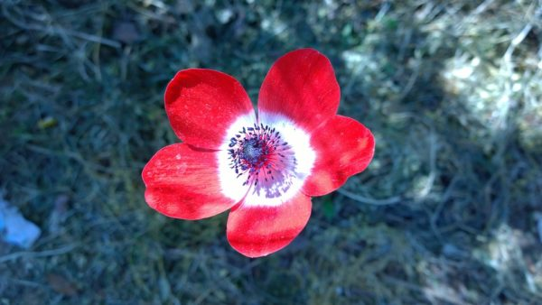 Estremamente Le piante che Amano l'Ombra: quali sono e come coltivarle BP74