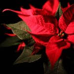 Piante che fioriscono in inverno
