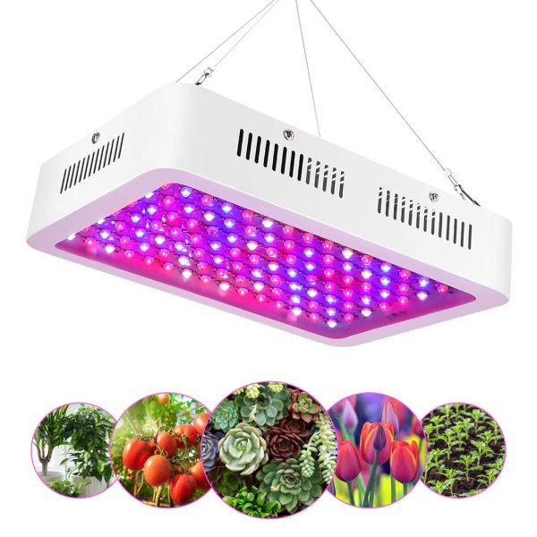 Lampade e luci per coltivare le piante indoor