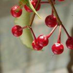 Le piante come  Idee Regalo per Natale. Alcuni Consigli