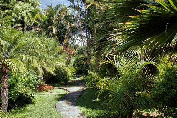 Palme consigli coltivazione e cura - Radici palma ...
