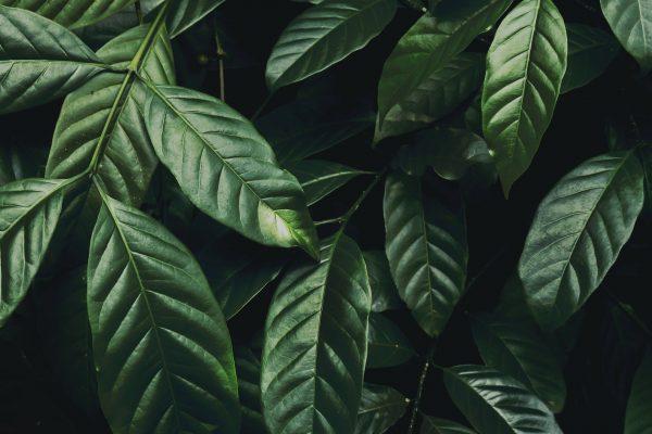 cura delle piante da appartamento Marzo