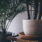 Le piante non vanno in vacanza: come curare le nostre piante in casa, sul balcone, in giardino durante i mesi di Luglio ed Agosto.