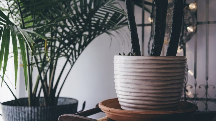 prendersi cura piante