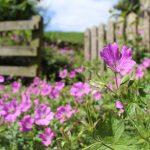 Le piante mese per mese: Giugno & Luglio