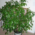 Le piante da appartamento: impariamo a curarle nel modo appropriato anche durante l'inverno.