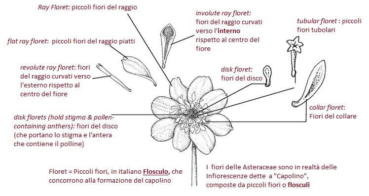 composizione fiore dalia