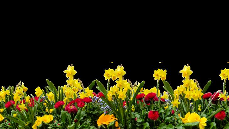 fiori aprile maggio