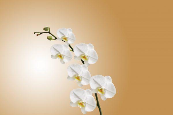cura piante in casa febbraio: Orchidee