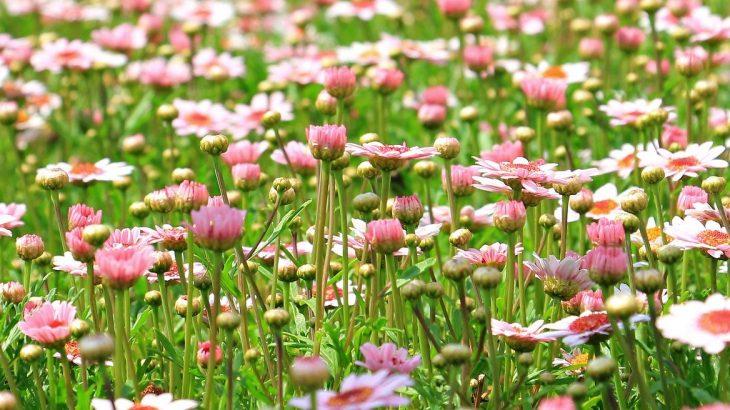 Cosa fiorisce ad aprile? Tutte le piante che fioriscono in primavera.