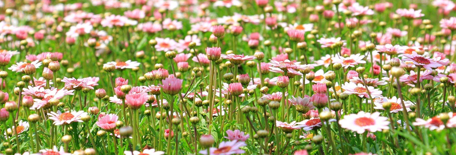 Fiori Che Amano Il Sole cosa fiorisce ad aprile