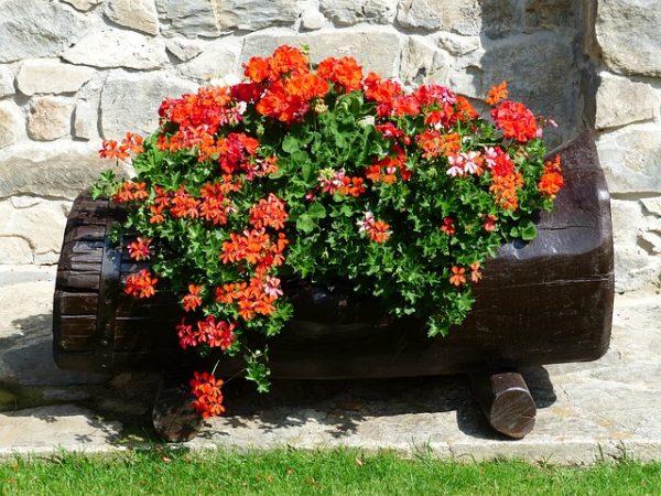 Vaso di fiori nel Tronco