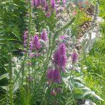 Il giardino di Stefano: come realizzare un giardino a bassa manutenzione in collina partendo da zero