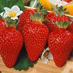 Piante da frutto: è possibile coltivarle nel giardino di casa?