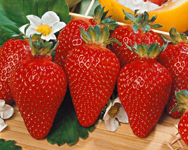 fragole e piante da frutto
