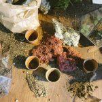 Come fare un buon drenaggio alle piante per evitare il marciume radicale