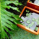 Piante da interni, piante da esterni, orto urbano: quali preferire?