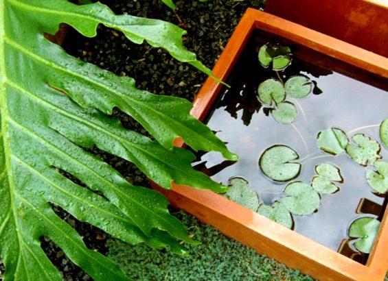 giardinaggio piante e fiori