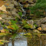Realizzare un incantevole giardino d'acqua in 3 step
