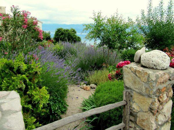 Piante mediterranee da giardino