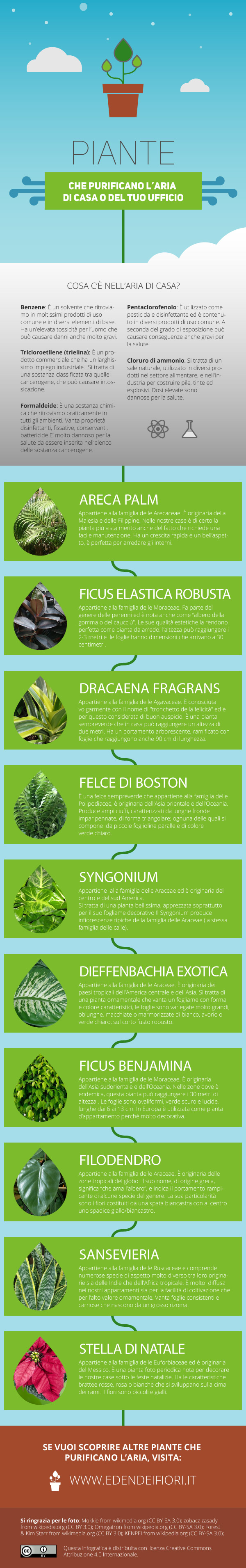 Tronchetto Della Felicità Da Esterno 50 piante che puliscono l'aria in casa o in ufficio, facili