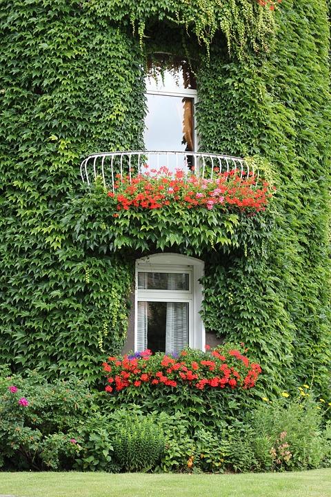 Edera consigli coltivazione e cura for Case ricoperte di edera