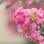 Cosa fiorisce ad Agosto