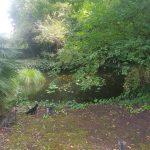 Il giardino con il laghetto di Maurizio